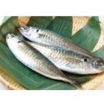 釣池魚 TSURI AJI あじ