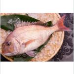 真鯛(porgy)