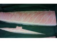 冷凍藍鰭金槍魚腹部份特選部位