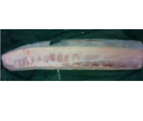 冷凍藍鰭金槍魚腹部部份